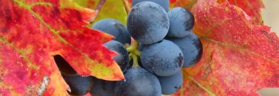 Directives générales pour la désignation et la présentation des vins et des boissons spirituex d'origine vinique de l'Argentine et la protection des institutions de la propriété intellectuelle
